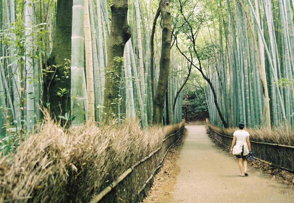 Bain de forêt / Sylvothérapie / Shinrin Yoku : qu'est-ce que c'est et comment faire ?
