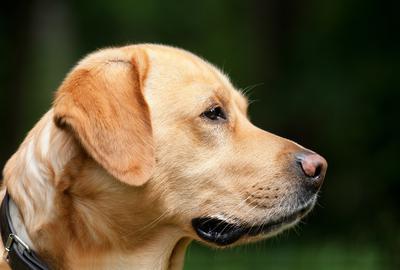 Le chien, ça fait du bien!