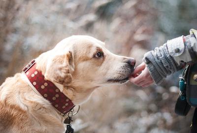 Ne laissez pas la peur du chien vous dominer!