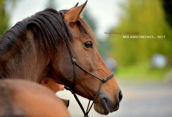 Mindfulness et chevaux