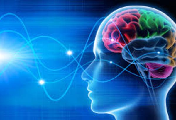 Formation en thérapie neurocognitive et comportementale