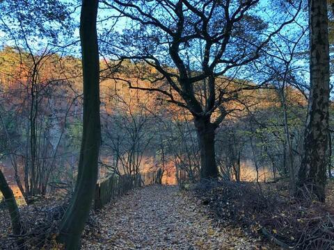 Walk & Talk. Séances de thérapie et de conseil en marchant dans la nature.
